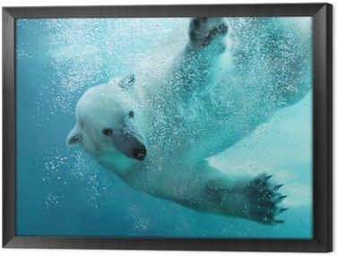 Obraz w Ramie Atak niedźwiedzia polarnego pod wodą