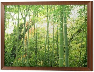 Obraz w Ramie Bambus lesie