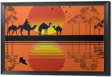 Obraz w Ramie Beduin wielbłąda karawana