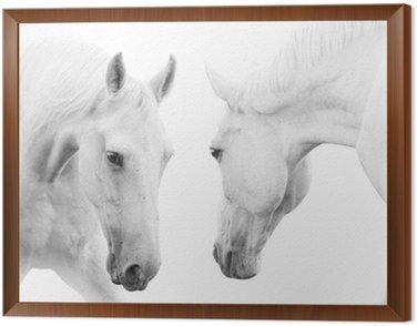Obraz w Ramie Białe konie