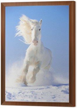 Obraz w Ramie Biały koń biegnie galop ogier w przedniej naciskiem