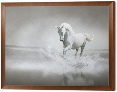 Obraz w Ramie Biały koń biegnie przez wody