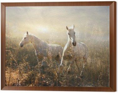 Obraz w Ramie Biały koń galopujący na łące