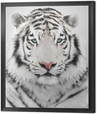 Obraz w Ramie Biały tygrys