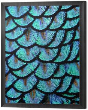 Obraz w Ramie Blue feathers
