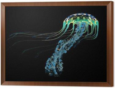 Blue meduzy