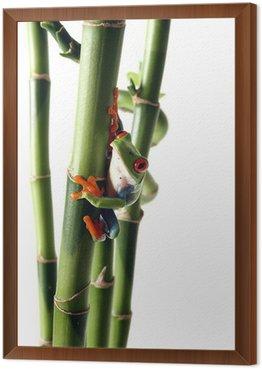 Obraz w Ramie Bright Treefrog