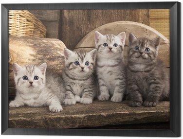 Obraz w Ramie British kitten na tle retro