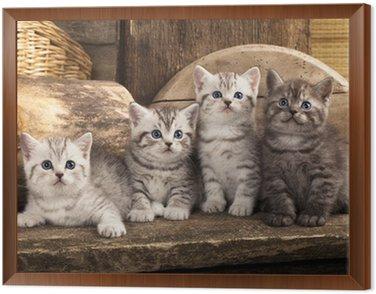 British kitten na tle retro