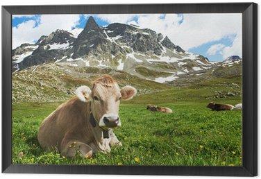Obraz w Ramie Brown krowa na zielonych pastwiskach trawa