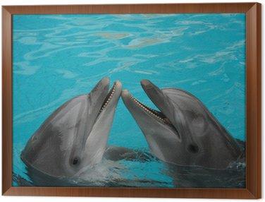 Obraz w Ramie Butelka nosed delfinów