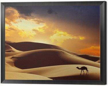 Obraz w Ramie Camel na Saharze, Maroko