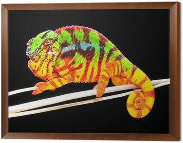Obraz w Ramie Chameleon pardalis