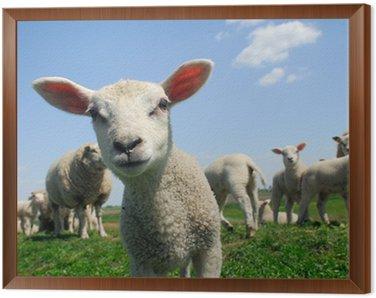 Obraz w Ramie Ciekawy jagnię wiosną