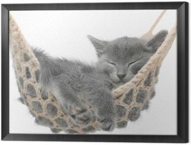 Cute kitten szary leżącego w hamaku
