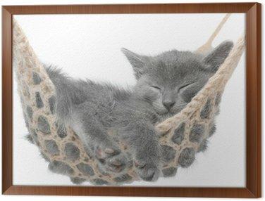 Obraz w Ramie Cute kitten szary leżącego w hamaku