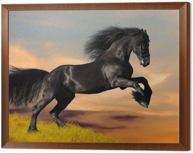 Obraz w Ramie Czarne konie fryzyjskie galopuje w zachodzie słońca