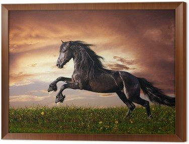 Obraz w Ramie Czarny koń galop fryzyjski