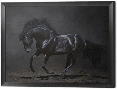 Obraz w Ramie Czarny koń galopujący na ciemnym tle