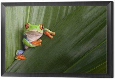 Obraz w Ramie Czerwony eyed drzewa żaba