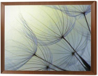 Obraz w Ramie Dandelion nasion