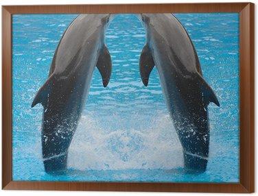 Obraz w Ramie Delfin bliźniaki