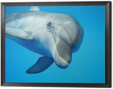 Obraz w Ramie Delfin pod wodą