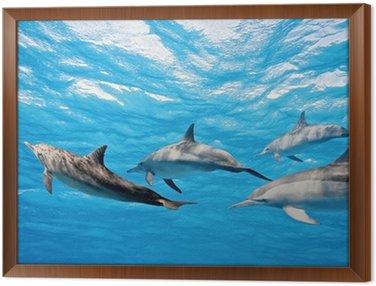 Obraz w Ramie Delfiny w morzu