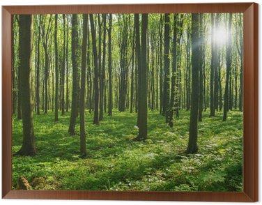 Obraz w Ramie Drzew leśnych. zieleni drewno światło słoneczne tła.