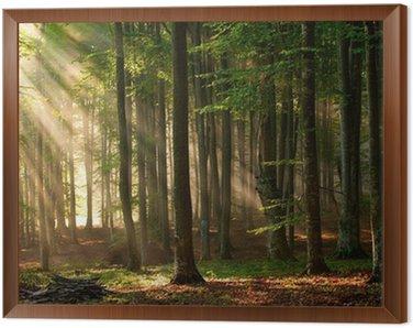 Obraz w Ramie Drzewa las jesienią. charakter zielone światło słoneczne drewna tła.