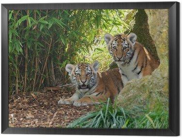 Dwa Adorable Amur Tiger Cubs Hiding w Shelter