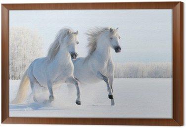 Obraz w Ramie Dwa białe kucyki galopujący