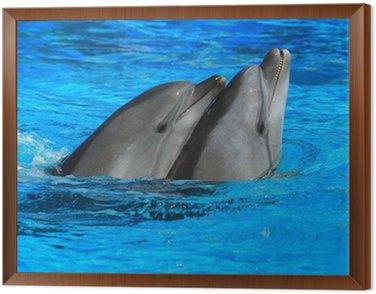 Obraz w Ramie Dwa delfiny