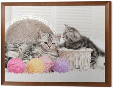 Obraz w Ramie Dwa koty w koszu z kulkami z przędzy