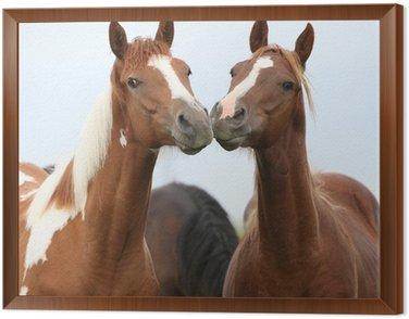 Dwie młode konie razem na pastwiska