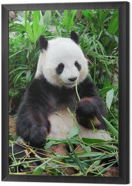 Obraz w Ramie Dzika panda
