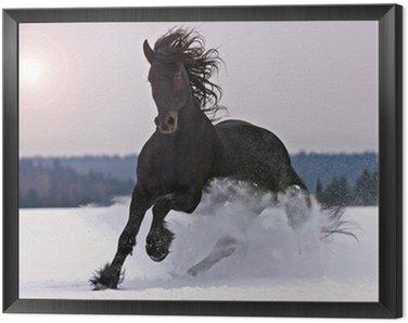 Obraz w Ramie Frisian jazda na śniegu