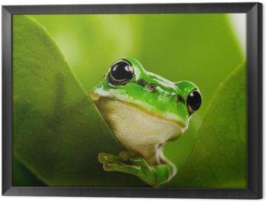 Obraz w Ramie Frog wystającym