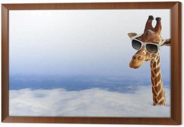 Obraz w Ramie Funny żyrafa z okulary wychodzi z chmury