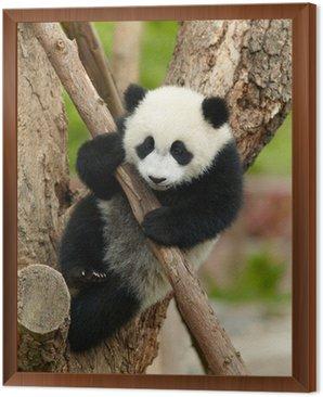 Obraz w Ramie Giant Baby Panda na drzewie