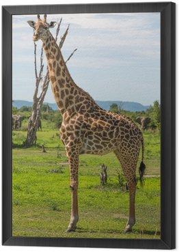 Obraz w Ramie Giraffe w Afryce, Zambia