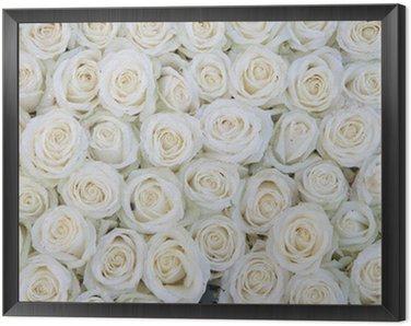 Obraz w Ramie Grupa białych róż po natryskiem