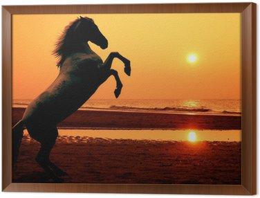 Obraz w Ramie Hodowlę konia o zachodzie słońca