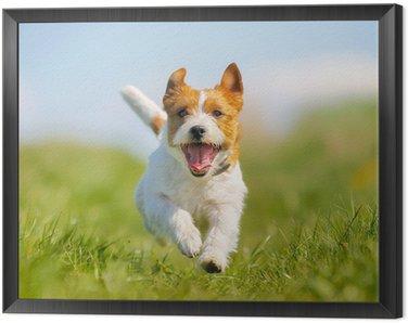Obraz w Ramie Jack Russell terrier