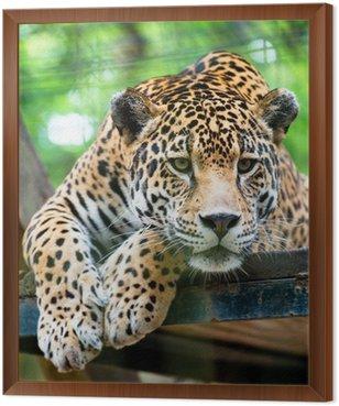 Obraz w Ramie Jaguar Ameryki Południowej
