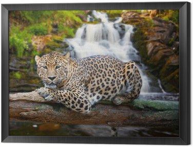 Obraz w Ramie Jaguar ma odpoczynku przed upadkiem