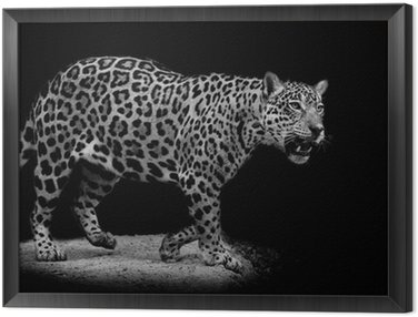 Jaguar portret