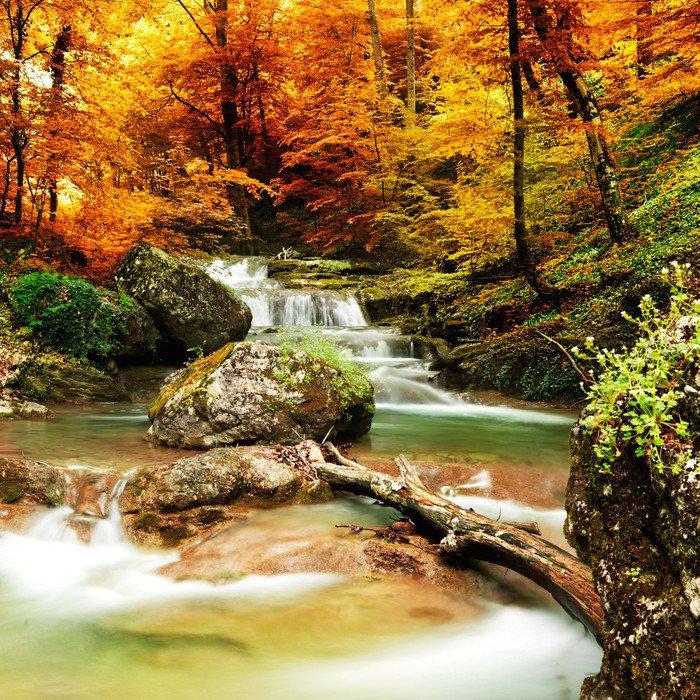 Obraz w Ramie Jesienią creek lasy z żółtym drzew - Wodospady