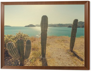 Obraz w Ramie Kaktus w Meksyku