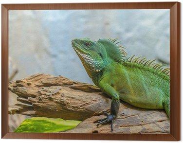 Obraz w Ramie Kameleon zielony